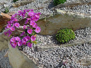 traditionele rotstuin met grote blokken jura findlingen